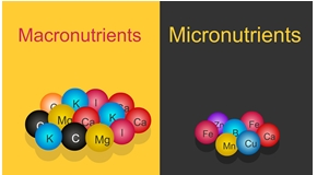 Biologically,Important,Elements:,Vitamins,,Micronutrients,,Macronutrients,And,Other,Active,Substances.