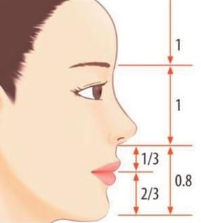 Figure 4. The most ideal ratio of three sections of the face (the side)